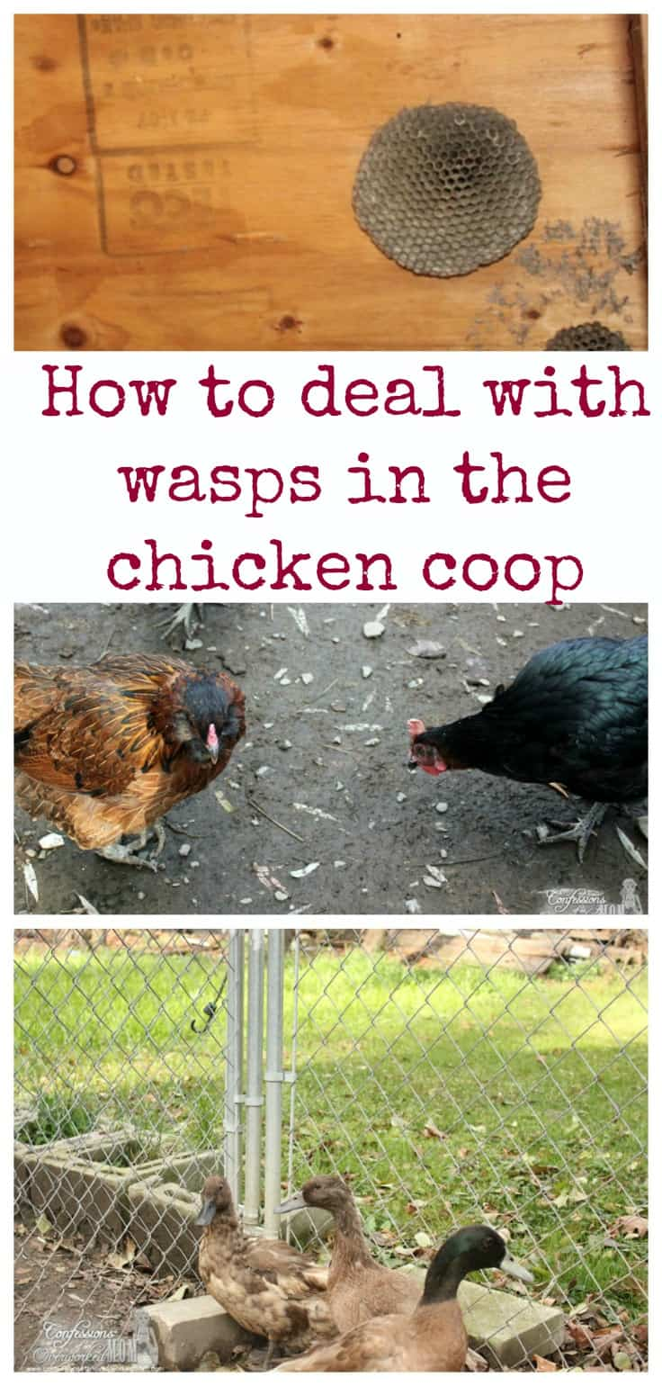 how to keep foxes away from chicken coop