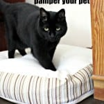 Healthy ways to pamper your pet