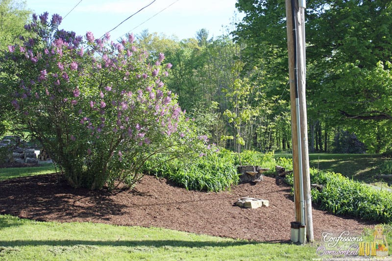 Lilacs And Landscaping Ideas You Can Add To Your Yard