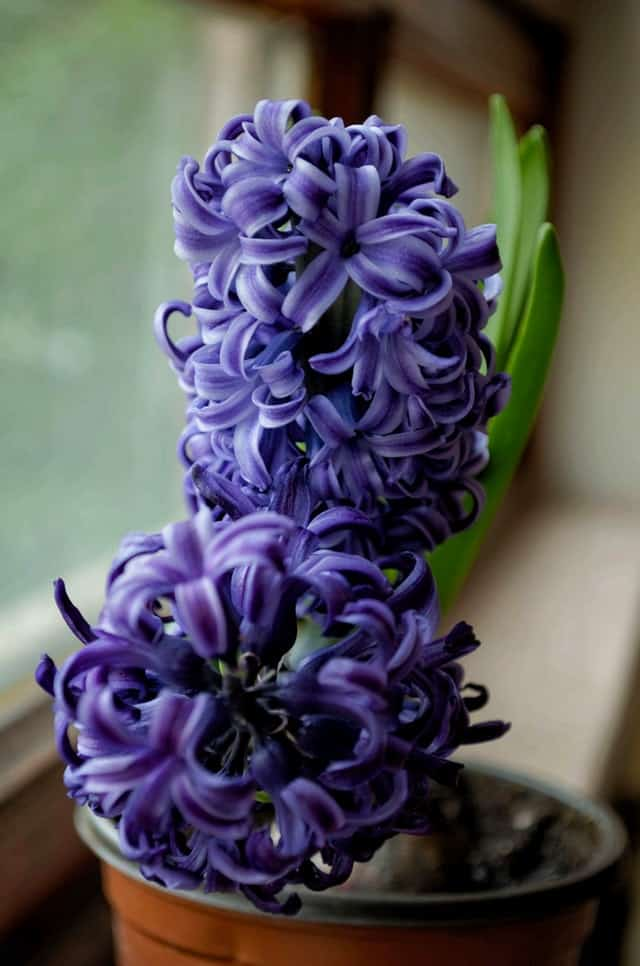 Best Fall Bulbs for Spring Blooms and Vibrant Colors