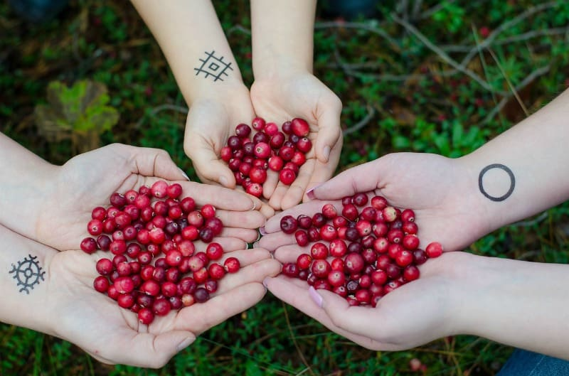 hands holding cranberries