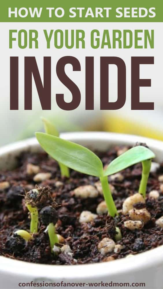 How to Start Seeds For Your Garden Inside